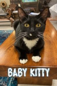 Baby Kitty2